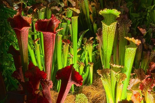 食虫植物は面白い!